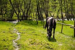 Horse grazing near a mountain river Stock Photos