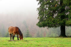Horse grazing near a tree Stock Photos