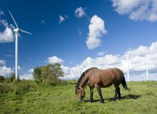 Horse grazing near turbines. A lone brown horse grazes on a field, near to some wind turbines Stock Images