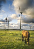Horse grazing near windmills. A horse grazing near wind turbines field, low late afternoon light and dramatic cloudscape Stock Image