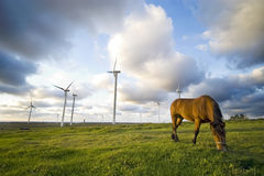 Horse grazing near windmills Royalty Free Stock Photo