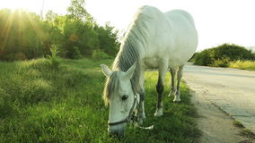 Horse grazing next to the lake stock video footage