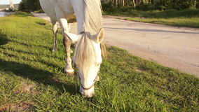Horse grazing next to the lake stock footage