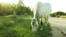 Horse grazing next to the lake stock video