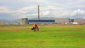 Horse grazing next to power plant stock footage