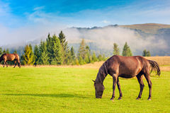 Horse grazing in a pasture Royalty Free Stock Photos
