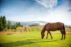 Horse grazing in a pasture Stock Images