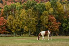 In the Pasture Stock Photography