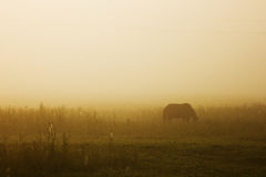 Horse grazing on pasture at sundown Stock Images