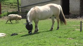 Horse grazing in a pasture stock video footage