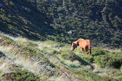 Horse grazing in Pyrenees Royalty Free Stock Photos