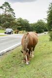 Horse grazing. Royalty Free Stock Photos