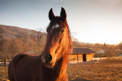 Horse grazing at sunset Stock Photos