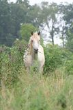 Horse grazing in tall grass. And trees royalty free stock photo