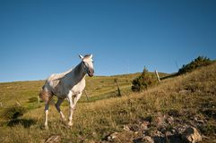 Horse grazing in the wild Stock Image