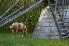 Horse grazing by windmill stock images