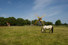 A horse grazing at a windmill Stock Photos
