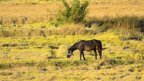 Horse grazling Stock Video stock video footage