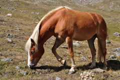Horse on green Royalty Free Stock Image