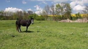 Horse stock video