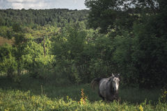 Horse in the green field horizontal Stock Images