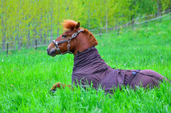 Horse on green field Stock Image