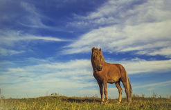 Horse on a green grass. With blue sky Stock Images