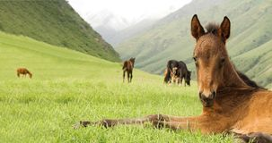Horse on green grass in mountain.  stock images