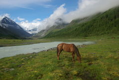 Horse among green grass in nature. Brown horse. Grazing horses in the mountains. Royalty Free Stock Photos