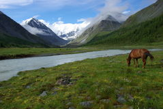 Horse among green grass in nature. Brown horse. Grazing horses in the village Stock Photography