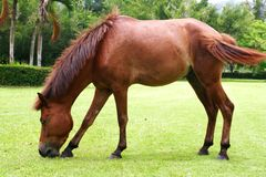 Horse on the green meadow Stock Photo
