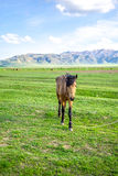 Horse on a green meadow Royalty Free Stock Photography