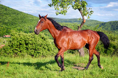 Horse in the green nature Stock Images