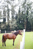 The horse. In the the green of the pasture Royalty Free Stock Image