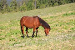 Horse on green pasture Stock Photography