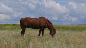 Horse on green pasture stock video footage
