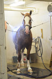 Horse Grooming Stock Images
