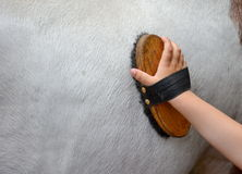 Horse grooming with hand Stock Photo