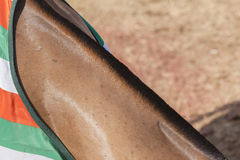 Horse Grooming Neck Stock Photo