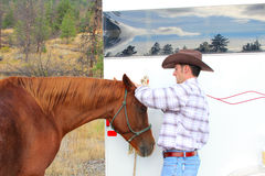 Horse grooming Royalty Free Stock Images