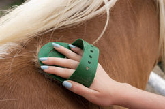 Horse grooming Royalty Free Stock Photos