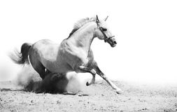 Horse on the ground Royalty Free Stock Images