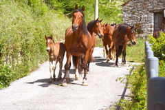 Horse Group with foal. Royalty Free Stock Image