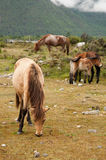 Horse. Group is now feeding on grass Stock Image
