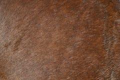Horse hair Stock Image