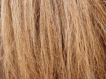 Horse hair Royalty Free Stock Photo
