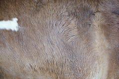 Horse hair Royalty Free Stock Photo