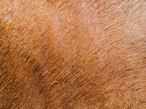 Horse hair texture Stock Images