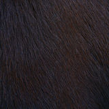 Horse hairy texture Stock Images
