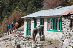 Horse half in a house. Trekking from Deboche to Khumjung Nepal Sagamatha National Park Stock Photo